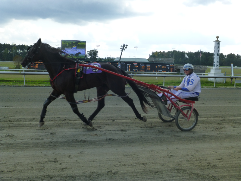 trotters are standardbred horses 2 wheeled sulky at harness race