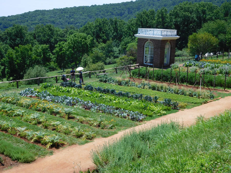 Colonial Agriculture In Virginia