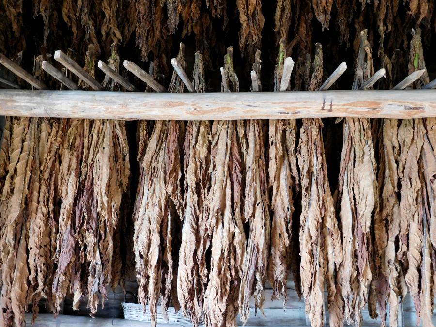 Tobacco in Virginia