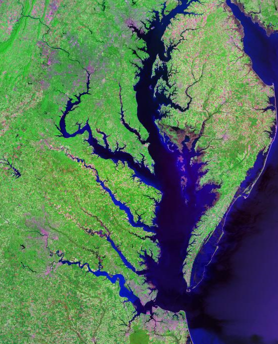 Chesapeake bay for Tidal fish chesapeake