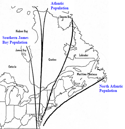 Canada Goose Migration Route Map
